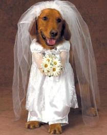 Dog bride 1